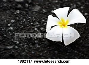 white-flower-ground_~1802117